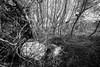 knocked over (primemundo) Tags: dogwood dogwood2018 overgrown cemetery graveyard tombstone gravestone abandoned cross knockedover monochrome moriah mtmoriahcemetery