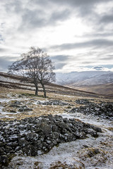(Chris B70D) Tags: go outdoors explore scotland outside hill walk winter sky february 2018 glen esk rowan tarfside cold hike steep clouds blue fresh clear crisp air countryside highlands north east landscape snow heather grass trees scenery sheep neutral colour cairn dog walking canon 70d raw edit visitscotland weekend sunday