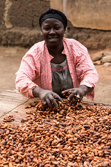 Cocoa beans drying (10b travelling / Carsten ten Brink) Tags: 10btravelling 2017 africa african afrika afrique carstentenbrink ghana ghanaian goldcoast iptcbasic kumasi places techiman westafrica beans cacao chocolate cocoa drying harvest tenbrink woman working