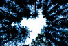 La Forêt Enchantée (patdesrochers1) Tags: adesrochersphotocom canada gaspesie patd patrickdesrochersphotographe quebec desrochersphotocom desrochersphotographegmailcom facebookcomdesrochersphoto outside photographie photography projet voyage ©patrickdesrochers
