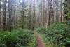 Typical view as we hiked on Scurvy Ridge (rozoneill) Tags: cape mountain berry creek siuslaw national forest hiking oregon florence princess tasha scurvy ridge trail nelson coastal