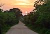 Sri_Lanka_17_185 (jjay69) Tags: srilanka ceylon asia indiansubcontinent tropical island yala yalanationalpark nationalpark wildlifetour wildlifespotting animalviewing viewing wildlife susnet sunsetting dusk