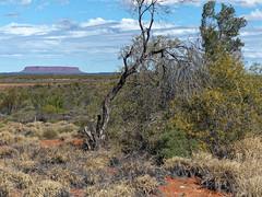 En route To Erldunda (Leguman vs the Blender) Tags: outback northernterritory australia australie lumix