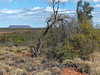 En route To Erldunda (Leguman vs the Blender) Tags: outback northernterritory australia australie lumix