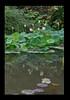 Duke Gardens July 2015 9.18.58 PM (LaPajamas) Tags: nc flora dukegardens gardens