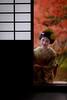 Maiko_20171120_12_19 (Maiko & Geiko) Tags: myokakuji temple fukuno kyoto maiko 20171120 舞妓 妙覚寺 ふく乃 京都 宮川町 河よ志 miyagawacho kawayoshi mait