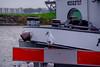 River Cruise-0612.jpg (Amadeus1110) Tags: netherlands dordrecht rivercruise bird seagull rhineriver