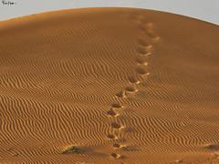 The Planet is Arrakis, also known as Dune (Karnevil) Tags: asia unitedarabemirates uae emirate dubai desert dunebashing sand sidemirror toyota landcruiser toyotalandcruiser dune arrakis paulatreides princessirulan frankherbert classicsciencefictionnovel b700 nikon petekreps footprints