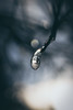 Frozen Rain Drop (Nicholas Erwin) Tags: frozen raindrop ice nature naturephotography bokeh depthoffield dof cold nikon d610 nikkor 2018g macro closeup waterbury vermont vt unitedstatesofamerica usa america fav10 fav25 fav50