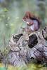 _MG_6736.jpg (jipvag) Tags: animal écureuil
