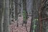 CKuchem-5823 (christine_kuchem) Tags: 14 2018 45 baumstamm baumstumpf bienen bienenstock blätter bäume fledermaus forst hambacher honigbienen impker impkerei januar kiste kästen laub löcher markierung moos nisthöhlen rinde stamm tagebau totholz wald waldspaziergang winter wurzel äste