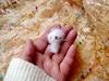 81-white bear 30mm (1) (tinyteensdolls) Tags: amigurumi amigurumibear bear crochet craft crochetmini crochettoy crochetminiature crochetteddy toy tinyamigurumi tiny threadcrochet teddy teddybear fluffy small miniature mini microcrochet minicrochet miniamigurumi