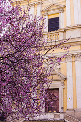 No winter lasts forever; no spring skips its turn. Hal Borland (druzi) Tags: church spring blossom bloom blooming pink rome tree flowers rosa chiesa roma primavera fioritura fiori albero colore