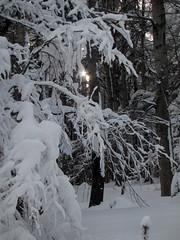 Zimski sončni žarek / Winter sun ray (Damijan P.) Tags: zima winter sneg snow pohorje trijekralji slovenija slovenia prosenak