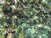 Coral (Peter_069) Tags: tauchen diving scuba malediven maldives äqypten egypt wasser water underwater unterwasser padi fische fisch fish shellfish muscheln moräne moränen moraine batfish fledermausfisch koralle korallen coral nemo clownfisch clownfish boot boat vessel blaueswasser bluewater