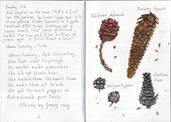 Cones (Hornbeam Arts) Tags: cypress pine redwood spruce