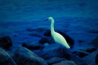 Egret Landing-HSS