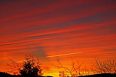 Red sunset (pelnit) Tags: pelnit norge norway sunset solnedgang nittedal akershus trær trees colours red rødt