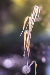 Ninja Star Bokeh (Of Light & Lenses) Tags: graden pond backlight sonya7rii carlzeiss olympiasonnar zeiss28180mm decay grass ninjastarbokeh bokehrama extremebokeh bokehlicious 8blades vintagelens