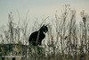 Lucky Black Cat (SLHPhotography1990) Tags: 2018 freshwater january woodland black cat cats pets animal wild country living lucky