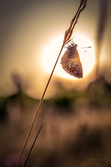 A good day is comming (pixtoleros) Tags: ifttt 500px macro sun sunlight silhouette butterfly insect dragonfly backlit pollen ladybug papillon montpellier argus languedocroussillon gulf fritillary herault pipevine swallowtail