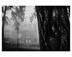U N T I T L E D  [ F O G  # 9 ] (bruXella & bruXellus) Tags: parcduden brüssel bruxelles brussels brussel belgien belgique belgium belgië leicax1 blackwhite bnw monochrome brume brouillard nebel fog grain grainy
