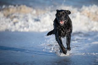 Old sea dog.