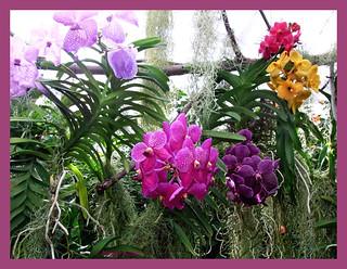 Orchideen-Haus Mainau am Bodensee