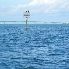 Resume Normal Safe Operation (soniaadammurray - Off) Tags: digitalphotography sea water sky clouds birds sign bridge ringlingbridge sarasota florida usa nature blue mondayblues seascape