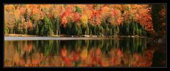 when I met magic (Ste_✪) Tags: eos760d ottobre2016 otoño autunno autumn canada canadá québec maple acero arce colorfulforest foliage lakescape elitegalleryaoi bestcapturesaoi