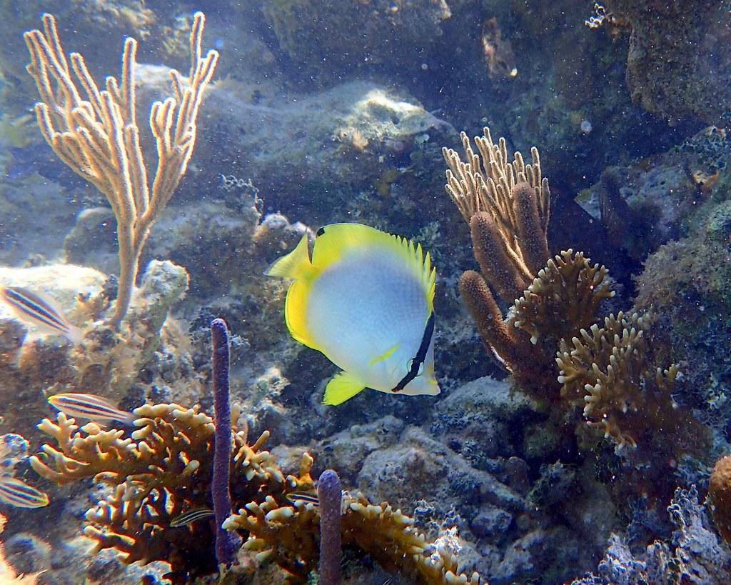 Caribbean Sea Creatures: The World's Newest Photos Of Underwaterphotos