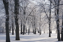 Bate Island in Ottawa (beyondhue) Tags: cold ice crystal tree bate island beyondhue ottawa quebec ontario canada winter snow frozen branch enveloped landscape park
