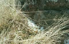 (a-e-m-e) Tags: film filmphotography kodakfilm 35mm 35mmphotography tasmania portra portra400 australia landscape nature water lake greatlakes flowers plants