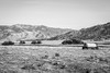 County Road 483, Caliente, California (paccode) Tags: solemn california d850 forgotten landscape monochrome tree farm blackwhite creepy hills abandoned quiet mountain unitedstates us