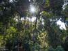 Jungle (Never.Stop.Searching.) Tags: maerim nature qsbg chiangmai thailand jungle trees