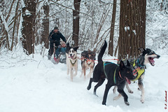 Having fun with sled dogs (alexey & kuzma) Tags: 2018 sled dog winter forest pentax k70 animal nature