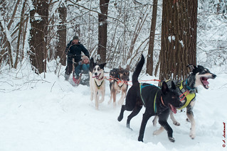 Having fun with sled dogs