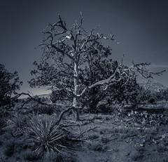 Trekriu (CEBImagery.com) Tags: sedona tree desert landscape monochromatic