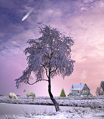 Comet at Christmas Night (*AdeCo*) Tags: winter schnee snow ice eis weiss white baum tree weihnachten christmas abend night komet comet pferde horses haus house cottage farm idylle nature landschaft landscape