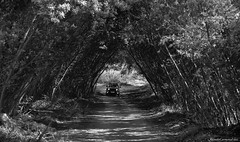 The way - El camino (ricardocarmonafdez) Tags: campo country naturaleza nature road camino way vegetacion vegetation foliage trees sunlight light sombras shadows monocromo monochrome blackandwhite 60d 1785isusm canon