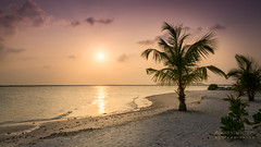 A9900826_s (AndiP66) Tags: sonnenuntergang sunset wolken clouds sonne sun evening abend adaaran select meedhupparu insel island malediven maldives februar february 2018 sony alpha sonyalpha 99markii 99ii 99m2 a99ii ilca99m2 slta99ii sigma sigma24105mmf4dghsmart sigma24105mm 24105mm art amount andreaspeters