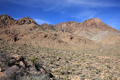 Providence Mountains (Dawn Coyote) Tags: mojave national preserve providence mountains state recreation area