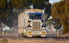 McNaughts (quarterdeck888) Tags: trucks transport semi class8 overtheroad lorry heavyhaulage cartage haulage bigrig jerilderietrucks jerilderietruckphotos nikon d7100 frosty flickr quarterdeck quarterdeckphotos roadtransport highwaytrucks australiantransport australiantrucks aussietrucks heavyvehicle express expressfreight logistics freightmanagement outbacktrucks truckies t904 t908 kenworth daycab roadtrain mcnaughts superhopper superhoppertrailer superhopperaustralia timpteaustralia timpte timptetrailers timptesuperhopper bellydump bellydumptrailers rice