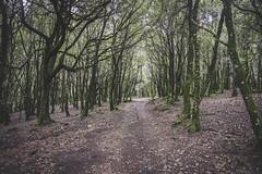 (Marci's) Tags: isnello pianobattaglia sentiero bosco