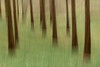 Two Valleys - 20180304_4 (Graham Dash) Tags: daffodilvalley icm twovalleys virginiawater windsorgreatpark blur intentionalcameramovement trees