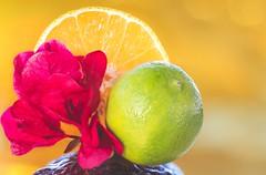 Nan (jarrardphotography) Tags: flower macromonday nikon yellow amarrilo bougainvillea citrus color fruit fruta gul jeune lime macro orange tokina