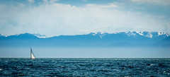 Lonely Sail (Dave GRR) Tags: vancouver island pacific ocean yacht mountain snow sky blue sail lonely free british columbia canada 2017 olympus omd em1 14150