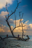 Skeleton (abhishek.verma55) Tags: skeleton deadtree trees tree kalapathar kalapatharbeach havelockislands havelock clouds cloudy cloudscape cloud cloudporn blue bluesky landscape landscapelovers landscapelover landscapes travel travelphotography canon550d tamron2470 tamron beautiful nature beautifulsky beauty beach andamannicobar andaman ©abhishekverma dead outdoor outdoors sea seascape seaside bayofbengal bay india indiatravel view scenery scenic scene tranquil people flickr photography orange evening eveninglight sunset incredibleindia