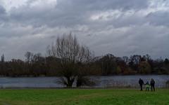Braunschweig, Südsee (bleibend) Tags: 2018 bs braunschweig südsee naherholungsgebiet naherholung natur nature naturschutzgebiet olympus omd em5 olympusomd olympusem5 leicasummilux25mmf14 mft m43 m43cameras