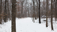 Winter Trees (John Westrock) Tags: winter trees nature forest snow trail cold midwest canoneos5dmarkiii canonef2470mmf28lusm waukesha minookapark